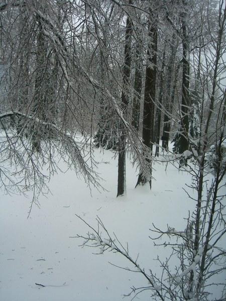 ©booksandbuttons ice storm Feb