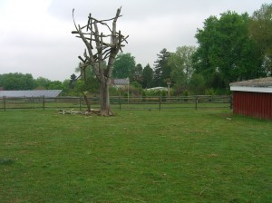 tree sculpture at Paxson Hill Farm