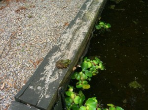 a little frog has the last word by a small pond.