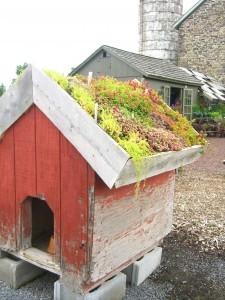 Fido's rooftop garden . . .©booksandbuttons