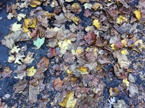 falling leaves clo